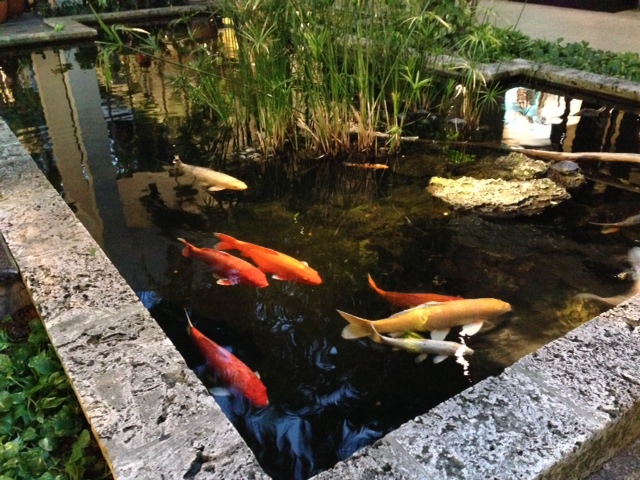 Koi ponds at Bal Harbour Claudia de Yong.