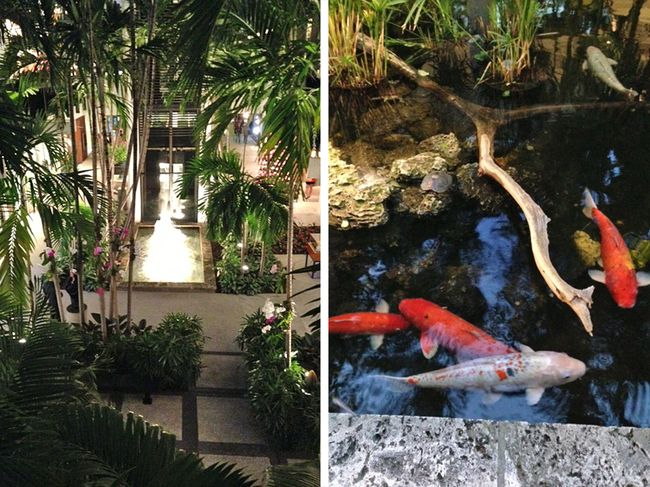 Koi-ponds-in-miami-claudia-de-yong