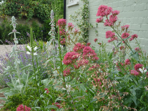 Herbaceous plants for the barn walls of courtyard garden