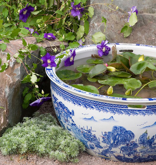 Planting tips ideas for a container water garden The Claudia