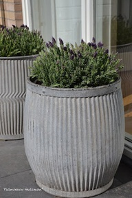 Dolly buckets with lavender
