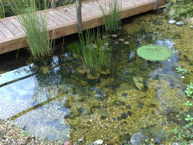 garden pond designed and built by Claudia de Yong Designs