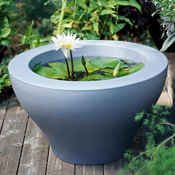 Planting tips ideas for a container water garden the for Pot pond ideas