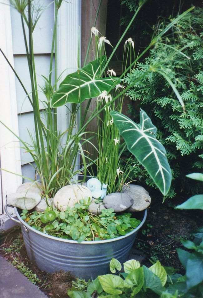 Container water garden in zinc tub
