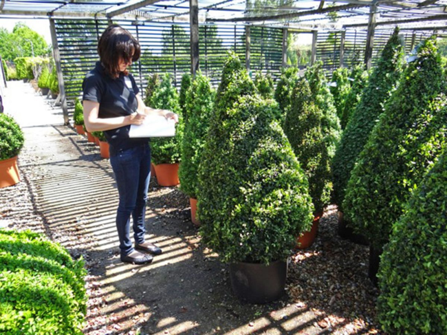 Claudia de Yong choosing shrubs for a client