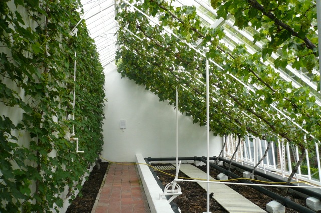 Why Space Saving Espalier Fruit Trees Are A Perfect Choice For