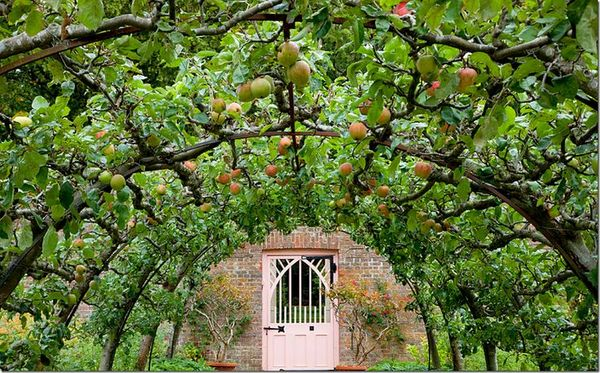Why space-saving 'Espalier' fruit trees are a perfect ...