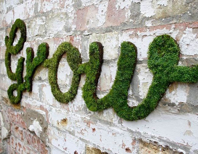 Grow moss on wall