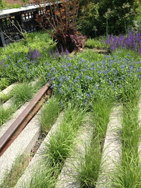 Detail of the planting on New York's High Line
