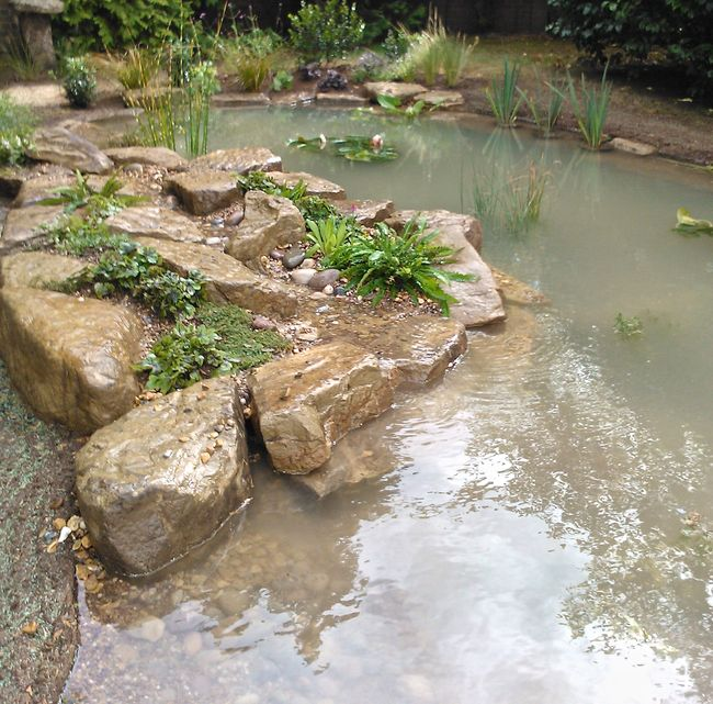 Wildlife Pond Surrounded By Pebbles: Wildlife Pond In Esher, Surrey