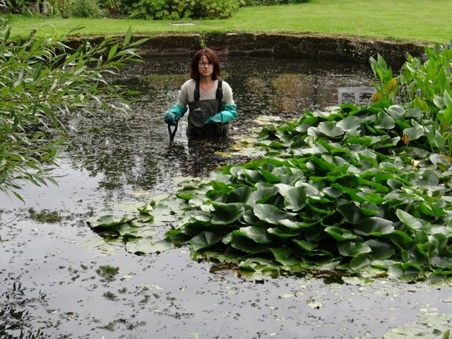 Pond clearing by Claudia de Yong Designs