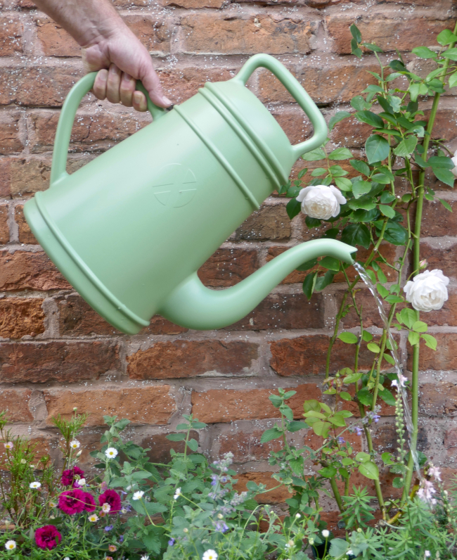 Green poring Coffee Pot Watering Can